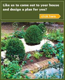 Let Us Design A Plan For You Boxwood Photos Welcome To Ak Nurseries